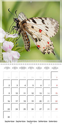 Butterflies Beauty of Nature (Wall Calendar 2019 300 × 300 mm Square) - Produktdetailbild 9