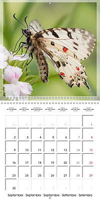 Butterflies Beauty of Nature (Wall Calendar 2019 300 × 300 mm Square) - Produktdetailbild 9
