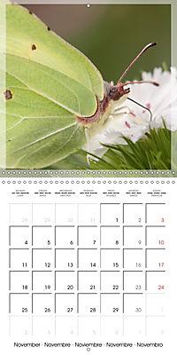 Butterflies Beauty of Nature (Wall Calendar 2019 300 × 300 mm Square) - Produktdetailbild 11