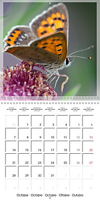 Butterflies Beauty of Nature (Wall Calendar 2019 300 × 300 mm Square) - Produktdetailbild 10