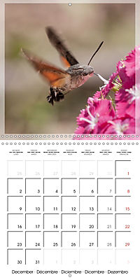Butterflies Beauty of Nature (Wall Calendar 2019 300 × 300 mm Square) - Produktdetailbild 12
