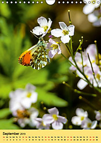 Butterflies of UK (Wall Calendar 2019 DIN A4 Portrait) - Produktdetailbild 9