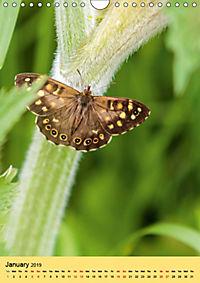 Butterflies of UK (Wall Calendar 2019 DIN A4 Portrait) - Produktdetailbild 1