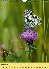 Butterflies of UK (Wall Calendar 2019 DIN A4 Portrait) - Produktdetailbild 4