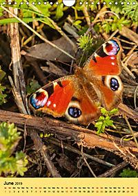 Butterflies of UK (Wall Calendar 2019 DIN A4 Portrait) - Produktdetailbild 6