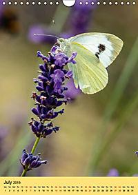 Butterflies of UK (Wall Calendar 2019 DIN A4 Portrait) - Produktdetailbild 7