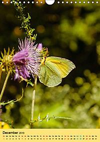 Butterflies of UK (Wall Calendar 2019 DIN A4 Portrait) - Produktdetailbild 12