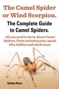 Camel Spider or Wind Scorpion. The Complete Guide to Camel Spiders. All You Need to Know About Camel Spiders. Facts Including Size, Speed, Bite and Habitat., Hathai Ross
