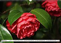 Camellias A Bright Spot in the Dark Season (Wall Calendar 2019 DIN A3 Landscape) - Produktdetailbild 3