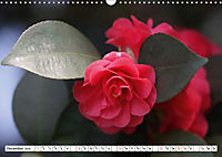 Camellias A Bright Spot in the Dark Season (Wall Calendar 2019 DIN A3 Landscape) - Produktdetailbild 12