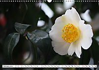 Camellias A Bright Spot in the Dark Season (Wall Calendar 2019 DIN A3 Landscape) - Produktdetailbild 2