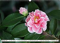 Camellias A Bright Spot in the Dark Season (Wall Calendar 2019 DIN A3 Landscape) - Produktdetailbild 1