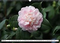 Camellias A Bright Spot in the Dark Season (Wall Calendar 2019 DIN A3 Landscape) - Produktdetailbild 6