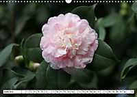 Camellias A Bright Spot in the Dark Season (Wall Calendar 2019 DIN A3 Landscape) - Produktdetailbild 6