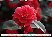 Camellias A Bright Spot in the Dark Season (Wall Calendar 2019 DIN A3 Landscape) - Produktdetailbild 7