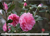 Camellias A Bright Spot in the Dark Season (Wall Calendar 2019 DIN A3 Landscape) - Produktdetailbild 9