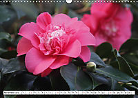 Camellias A Bright Spot in the Dark Season (Wall Calendar 2019 DIN A3 Landscape) - Produktdetailbild 11