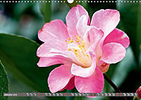 Camellias (Wall Calendar 2019 DIN A3 Landscape) - Produktdetailbild 1