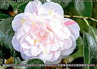 Camellias (Wall Calendar 2019 DIN A3 Landscape) - Produktdetailbild 6