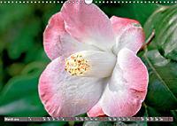 Camellias (Wall Calendar 2019 DIN A3 Landscape) - Produktdetailbild 3
