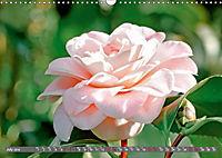 Camellias (Wall Calendar 2019 DIN A3 Landscape) - Produktdetailbild 7