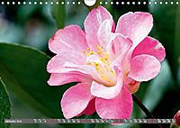 Camellias (Wall Calendar 2019 DIN A4 Landscape) - Produktdetailbild 1