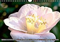 Camellias (Wall Calendar 2019 DIN A4 Landscape) - Produktdetailbild 4
