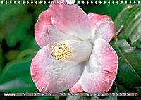 Camellias (Wall Calendar 2019 DIN A4 Landscape) - Produktdetailbild 3