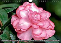 Camellias (Wall Calendar 2019 DIN A4 Landscape) - Produktdetailbild 2