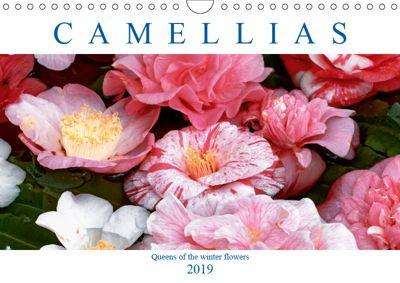 Camellias (Wall Calendar 2019 DIN A4 Landscape), Dieter Meyer