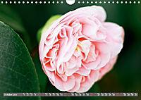 Camellias (Wall Calendar 2019 DIN A4 Landscape) - Produktdetailbild 10
