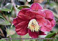 Camellias (Wall Calendar 2019 DIN A4 Landscape) - Produktdetailbild 9