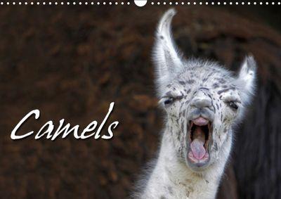 Camels / UK-Version (Wall Calendar 2019 DIN A3 Landscape), Martina Berg