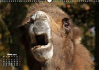Camels / UK-Version (Wall Calendar 2019 DIN A3 Landscape) - Produktdetailbild 6