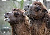 Camels / UK-Version (Wall Calendar 2019 DIN A3 Landscape) - Produktdetailbild 10