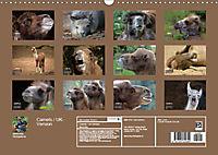 Camels / UK-Version (Wall Calendar 2019 DIN A3 Landscape) - Produktdetailbild 13