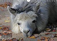 Camels / UK-Version (Wall Calendar 2019 DIN A4 Landscape) - Produktdetailbild 2