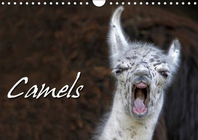 Camels / UK-Version (Wall Calendar 2019 DIN A4 Landscape), Martina Berg