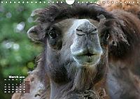 Camels / UK-Version (Wall Calendar 2019 DIN A4 Landscape) - Produktdetailbild 3