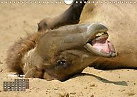 Camels / UK-Version (Wall Calendar 2019 DIN A4 Landscape) - Produktdetailbild 8