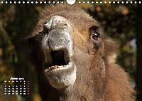 Camels / UK-Version (Wall Calendar 2019 DIN A4 Landscape) - Produktdetailbild 6