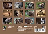 Camels / UK-Version (Wall Calendar 2019 DIN A4 Landscape) - Produktdetailbild 13