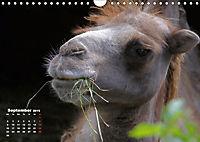 Camels / UK-Version (Wall Calendar 2019 DIN A4 Landscape) - Produktdetailbild 9