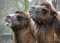 Camels / UK-Version (Wall Calendar 2019 DIN A4 Landscape) - Produktdetailbild 10