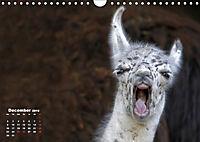 Camels / UK-Version (Wall Calendar 2019 DIN A4 Landscape) - Produktdetailbild 12