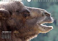 Camels / UK-Version (Wall Calendar 2019 DIN A4 Landscape) - Produktdetailbild 11