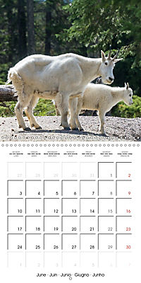 Canada Rocky Mountains National Parks (Wall Calendar 2019 300 × 300 mm Square) - Produktdetailbild 6