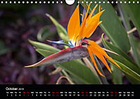Canary Islands, Spring, sun and sea (Wall Calendar 2019 DIN A4 Landscape) - Produktdetailbild 10