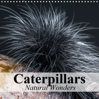 Caterpillars Natural Wonders (Wall Calendar 2019 300 × 300 mm Square), Elisabeth Stanzer