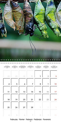 Caterpillars Natural Wonders (Wall Calendar 2019 300 × 300 mm Square) - Produktdetailbild 2